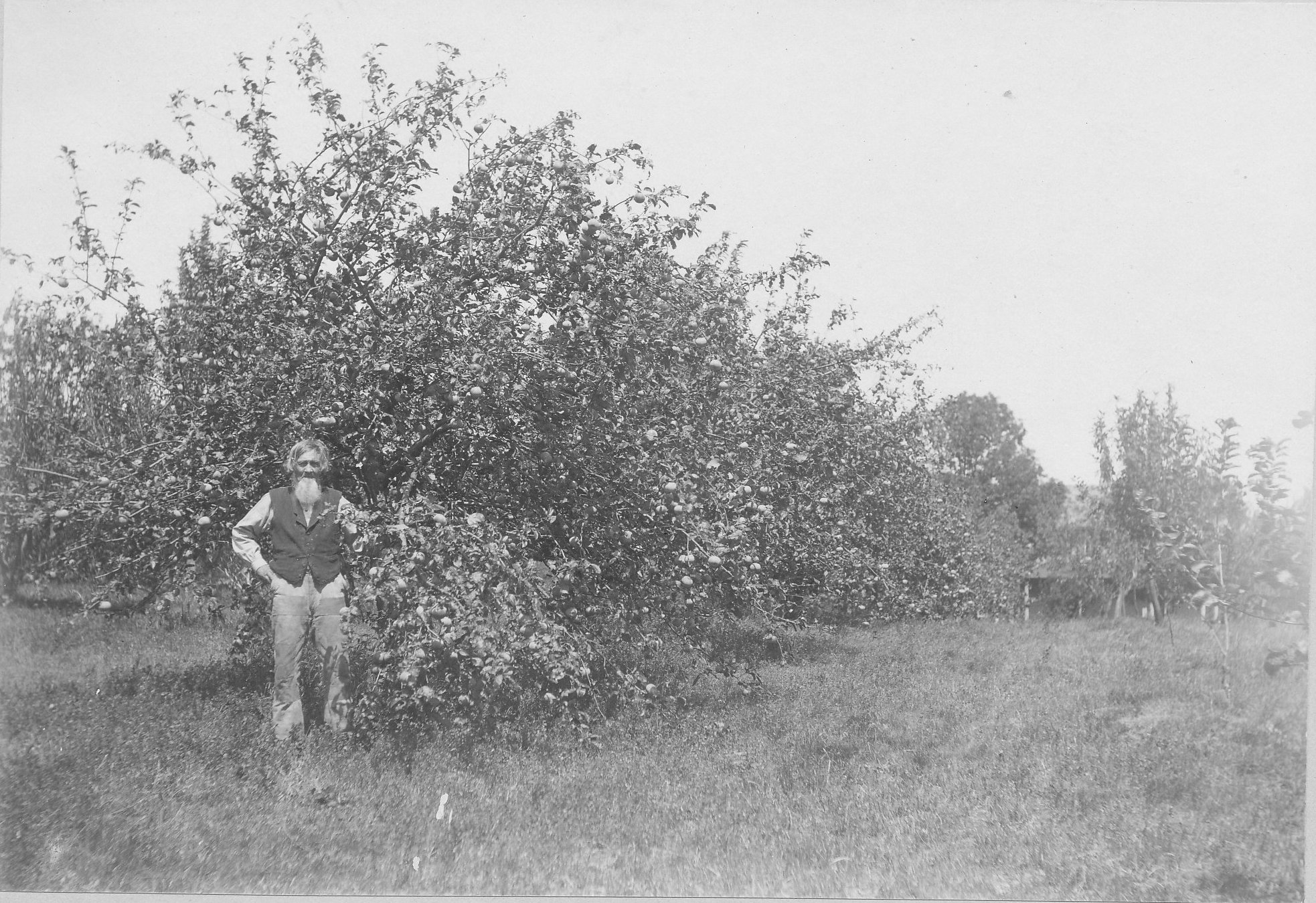 Peterson in his orchard